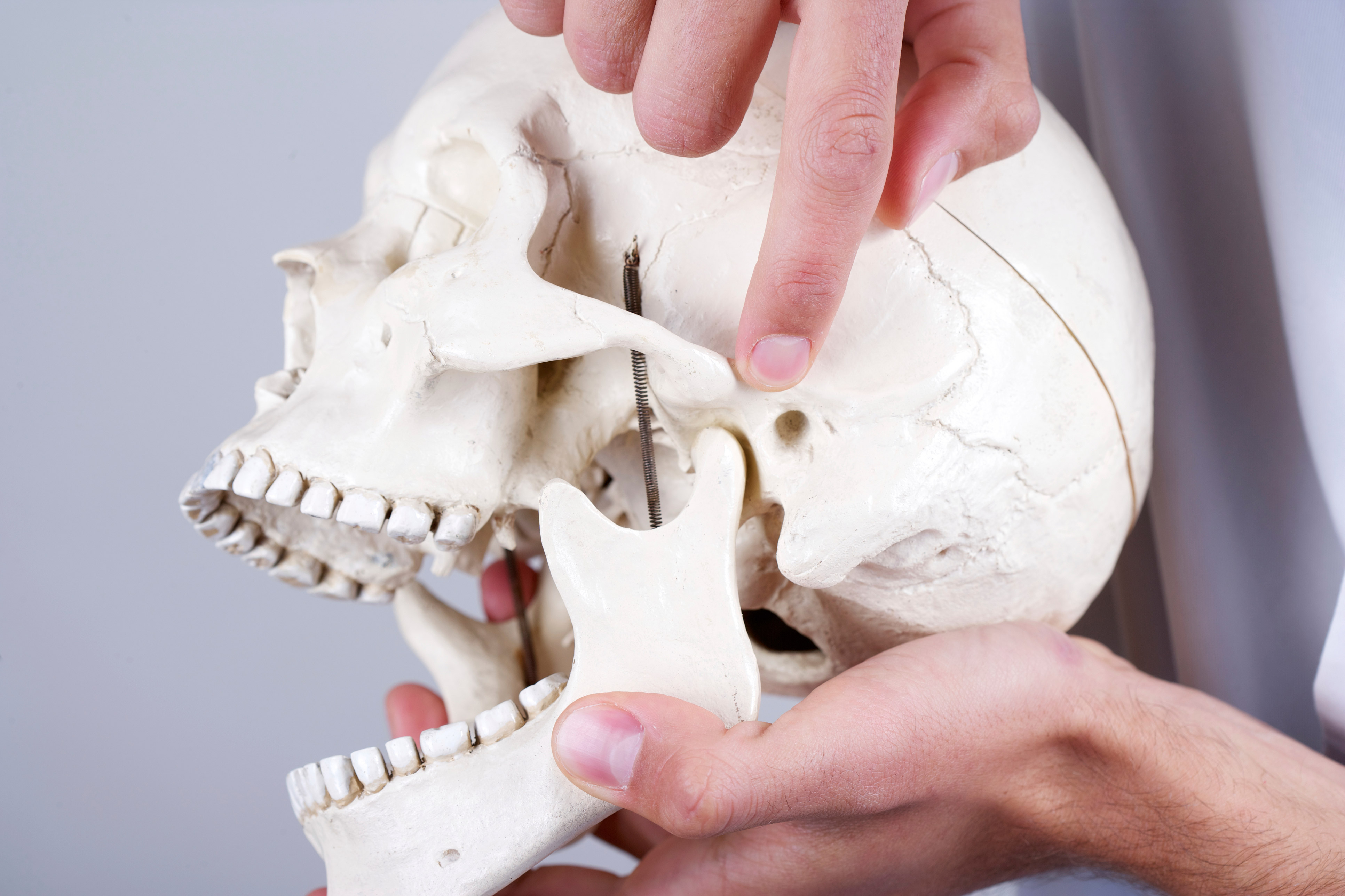 Image of a person holding a skull and pointing to the TMJ